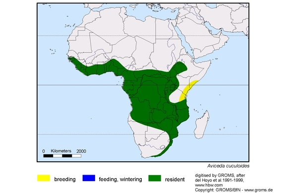 African Cuckoo-Hawk distribution range map