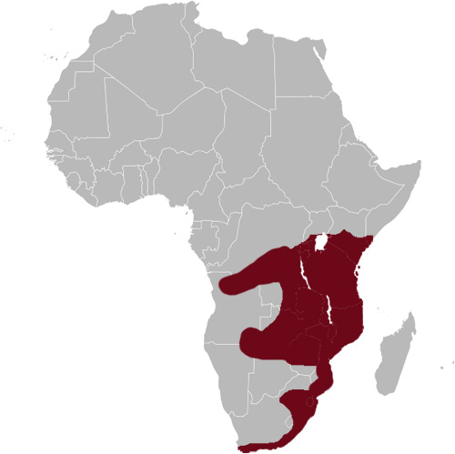 African Marsh Harrier distribution range map