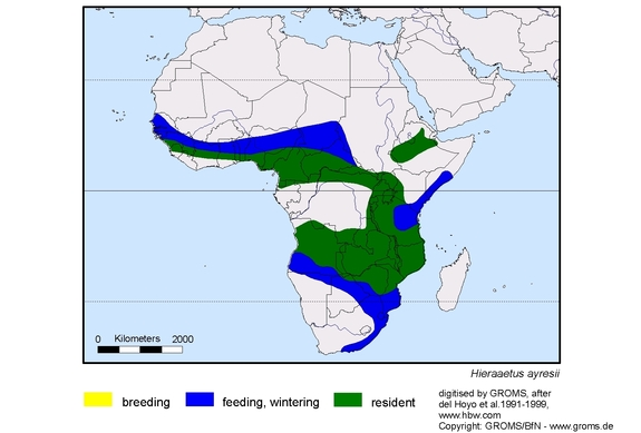 Ayress Hawk-Eagle distribution range map