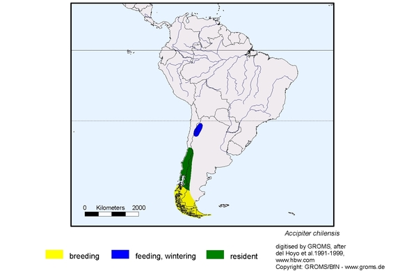 Chilean Hawk distribution range map