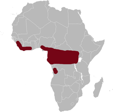 Congo Serpent Eagle distribution range map