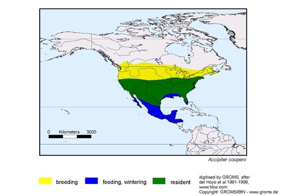 Coopers Hawk distribution range map