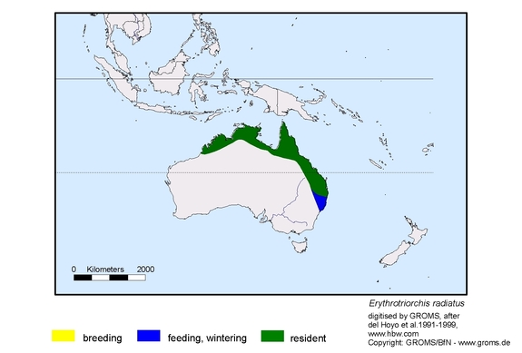 Red Goshawk distribution range map