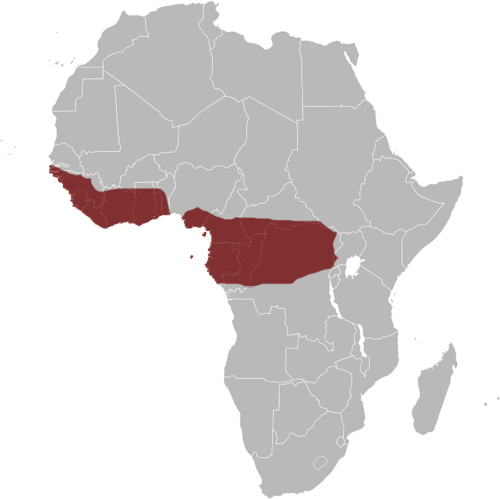 Red-chested Goshawk distribution range map