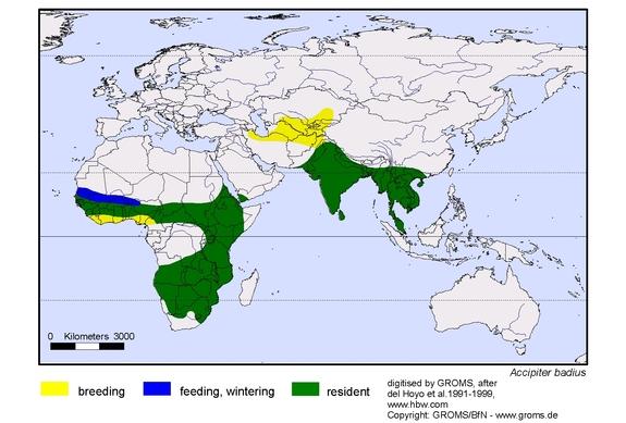 Shikra distribution range map