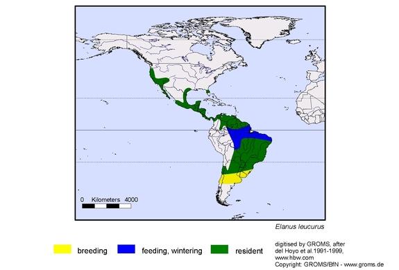 White-tailed Kite distribution range map