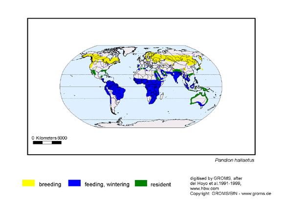 Western Osprey distribution range map