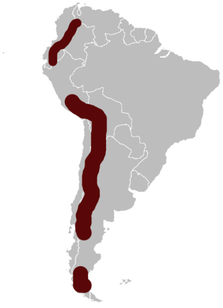 Andean Duck distribution range map