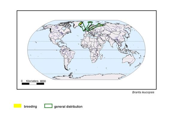 Barnacle Goose distribution range map