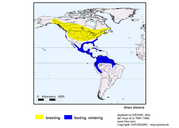 Blue-winged Teal distribution range map