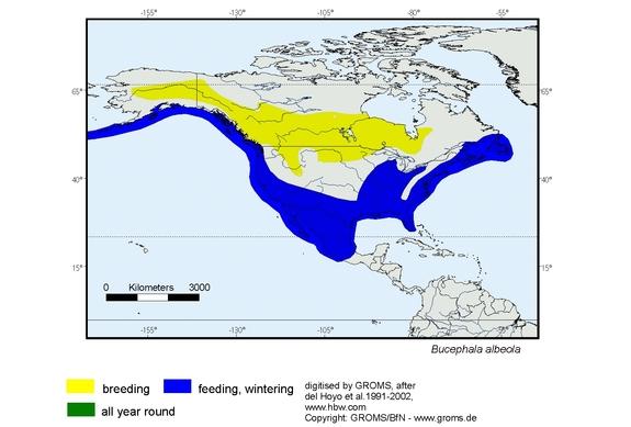 Bufflehead distribution range map
