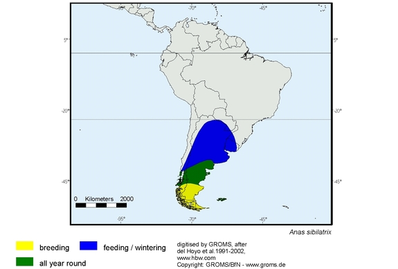 Chiloe Wigeon distribution range map
