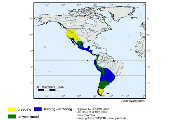 Cinnamon Teal distribution range map