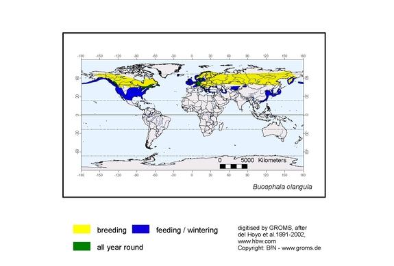Goldeneye distribution range map