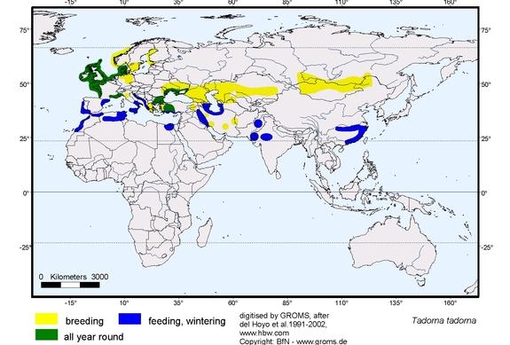 Shelduck distribution range map
