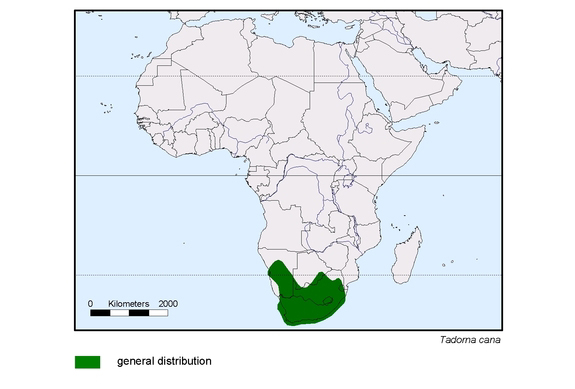 South African Shelduck distribution range map