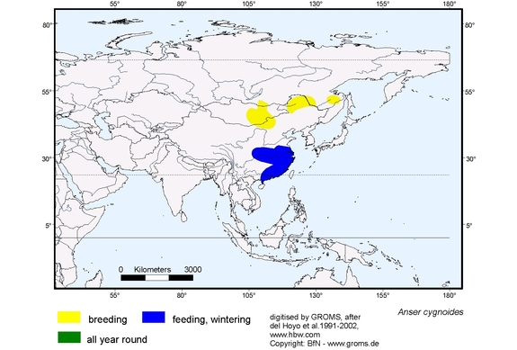Swan Goose distribution range map