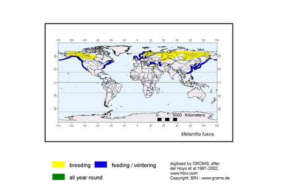 White-winged Scoter distribution range map
