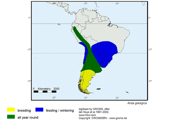 Yellow-billed Pintail distribution range map