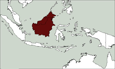 Bornean Frogmouth distribution range map