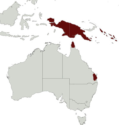 Marbled Frogmouth distribution range map