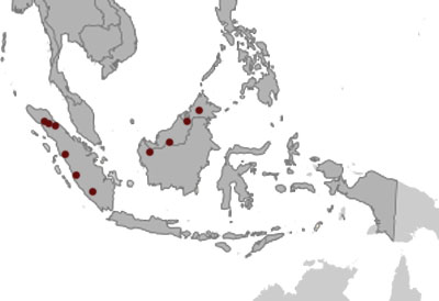 Short-tailed Frogmouth distribution range map