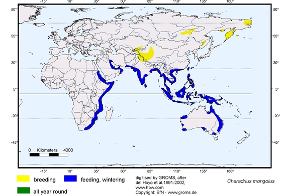 Lesser Sand Plover distribution range map