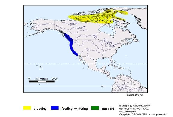 Thayers Gull distribution range map