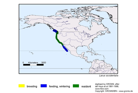 Western Gull distribution range map