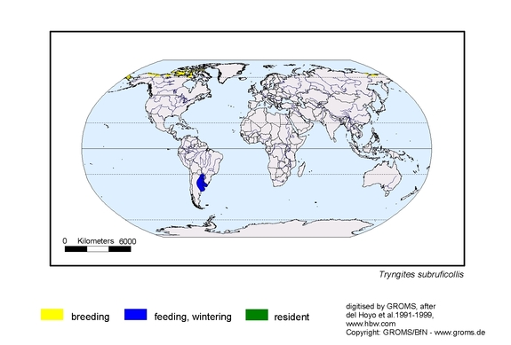 Buff-breasted Sandpiper distribution range map