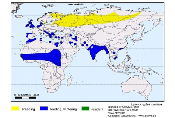 Jack Snipe distribution range map
