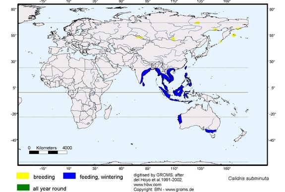 Long-toed Stint distribution range map