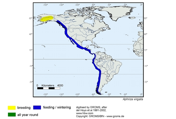 Surfbird distribution range map