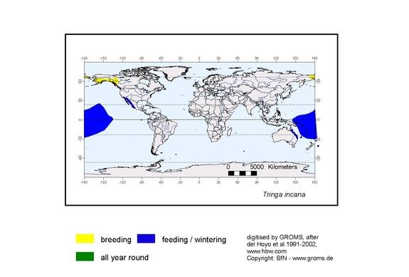 Wandering Tattler distribution range map