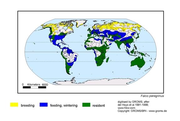 Peregrine Falcon distribution range map