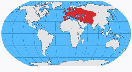 Jackdaw distribution range map