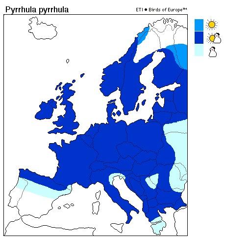 Goldfinch distribution range map
