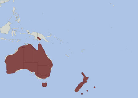 Australian Pipit distribution range map