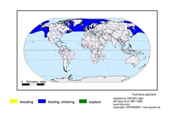 Fulmar distribution range map