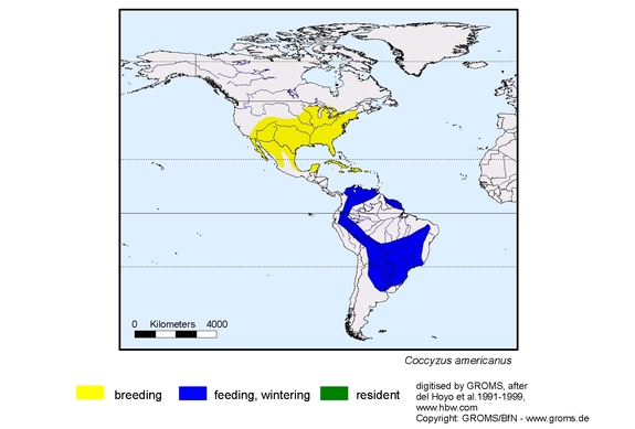 Yellow-billed cuckoo range map