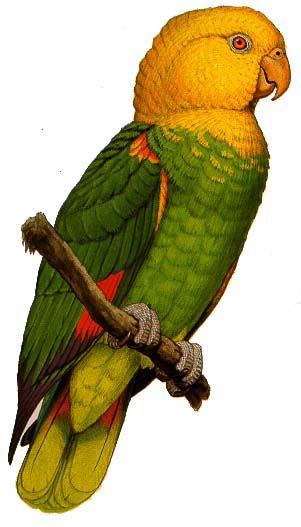 Tres Marias Amazon