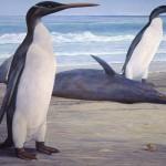 kairuku penguin Artwork by Chris Gaskin