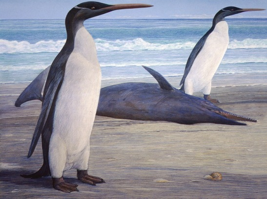 kairuku penguin Artwork by Chris Gaskin