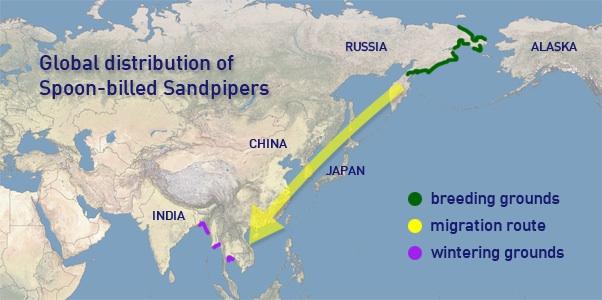 Spoon-billed Sandpiper map