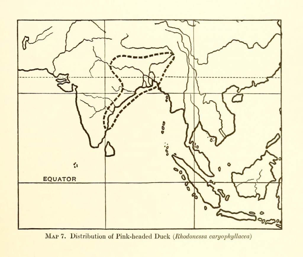 Pink-headed Duck map 1922
